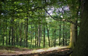 Explore the woodland at nearby Abbeystead